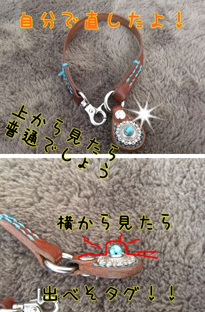 cats-1_20130129201605.jpg