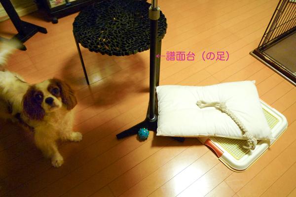 太郎物語P1020088