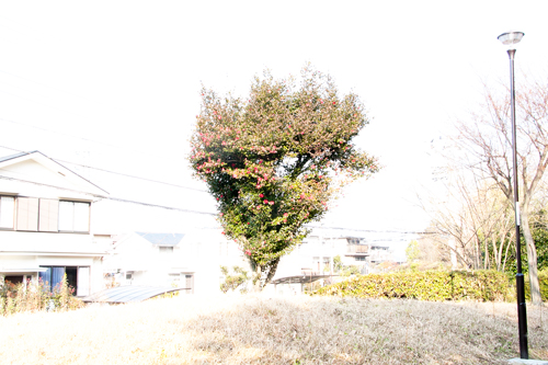 太郎物語_MG_2663