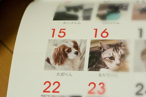 太郎物語_MG_2686