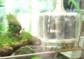水咲く飼育