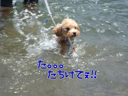 JD0_Zm4trXO6tL8-9.jpg