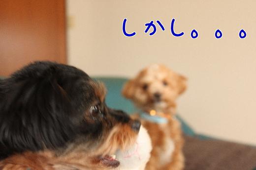 me5DVghKXmcc0aG-7.jpg