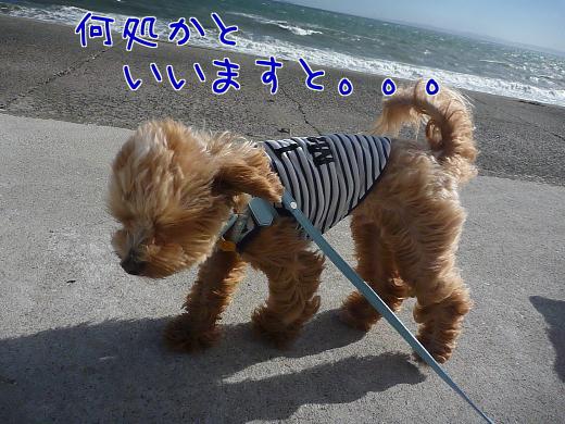 qXOl_YxtPPHJ4LE-2.jpg