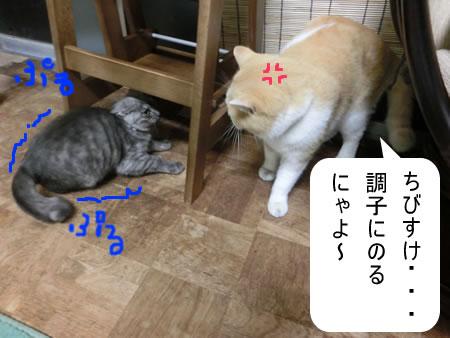 2014-11_14_03.jpg