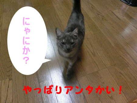2014-12_21_07.jpg