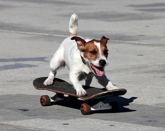 dogskate.jpg