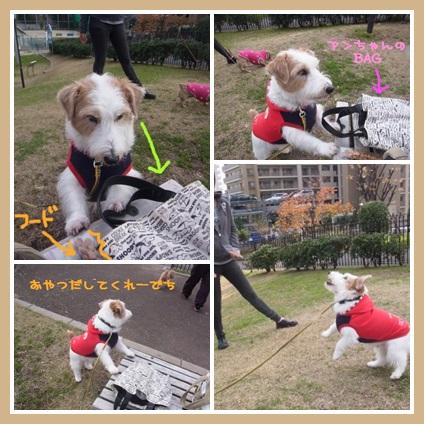 catsbhu666.jpg