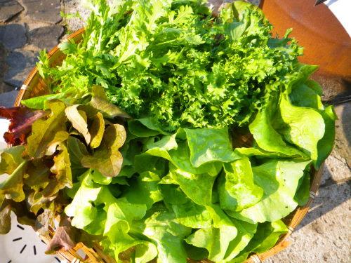 葉野菜56