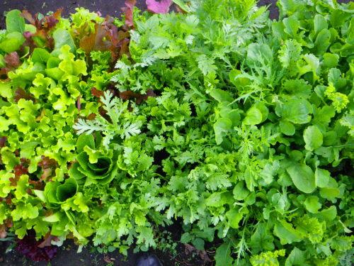 ミックス野菜521