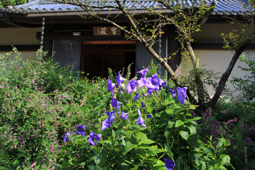 byakugo09167.jpg