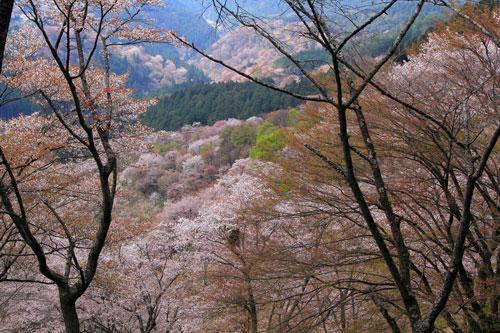 kamisenbon0419.jpg