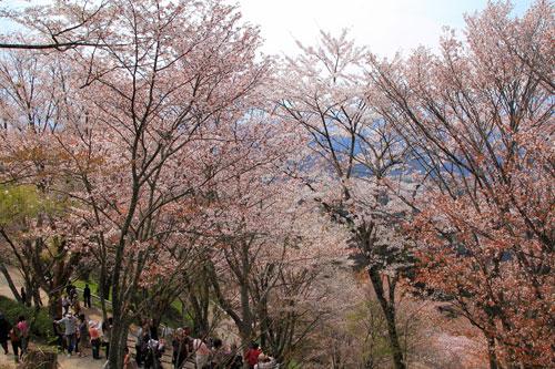 kamisenbon04191.jpg