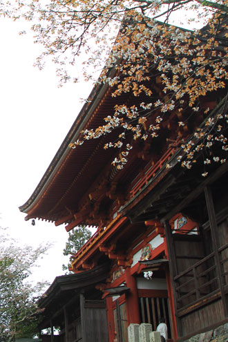 mikumari0426.jpg