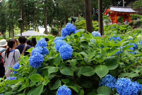mimuro06201.jpg