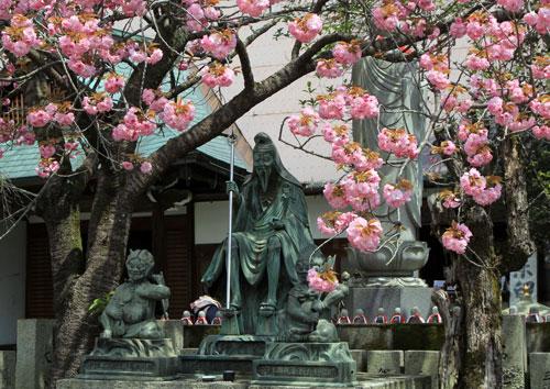 sakurahonbo05014.jpg
