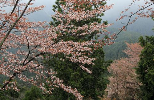 takagiyama0424.jpg
