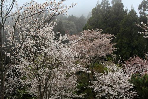 takagiyama04241.jpg