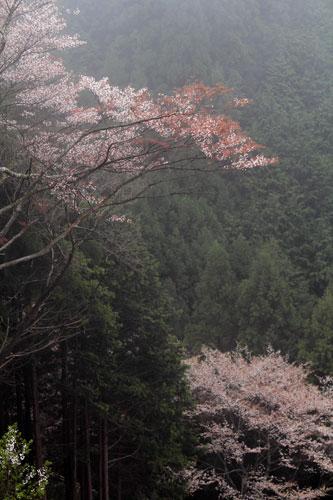 takagiyama04246.jpg
