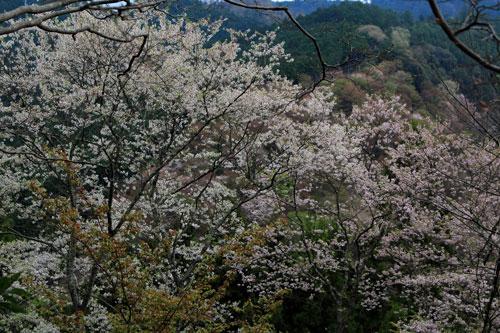 yosimizu0504.jpg