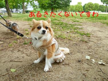 りんちゃんあるこ?