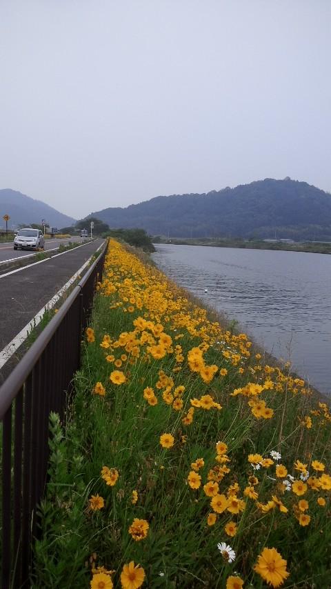 黄色い花群生