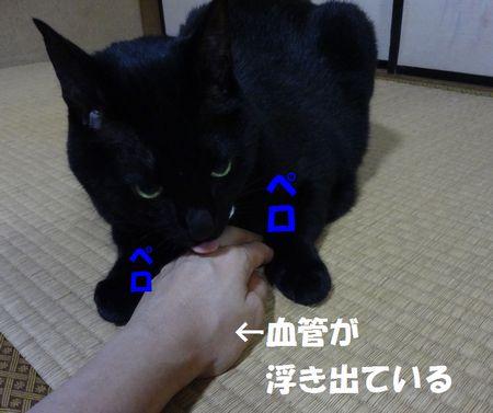 417.jpg