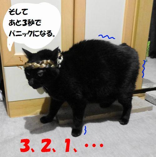 523.jpg
