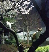 住吉文化会館猫