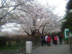 s-2012-04-24 18.39.59sakuramiruhito