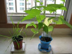 IMG_5096鉢植え二つ