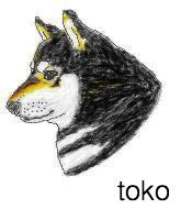 sch-yoko1.jpg