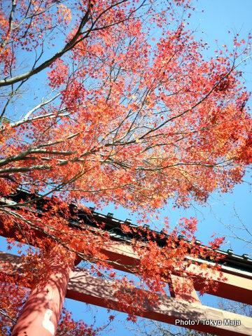 20121118紅葉の高尾山~小仏城山-004