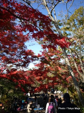 20121118紅葉の高尾山~小仏城山-008