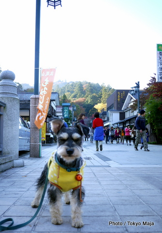 20121118紅葉の高尾山~小仏城山-024