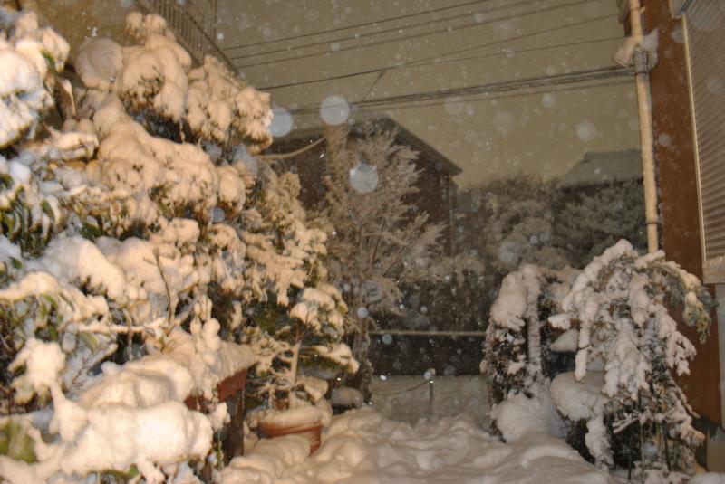 2014/2/8 雪
