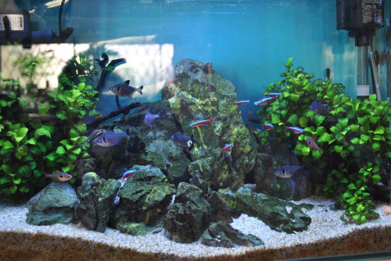 2014/2/9 熱帯魚水槽