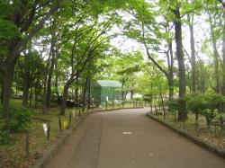 東京の自然③