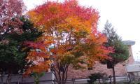20112.11.1 紅葉