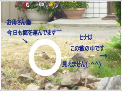 kotori3.jpg