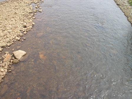 サケ溯上河川