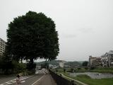 20100622-40イチョウと上ノ橋② (160x120)