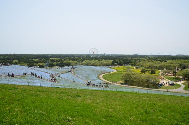 ひたち海浜公園_001