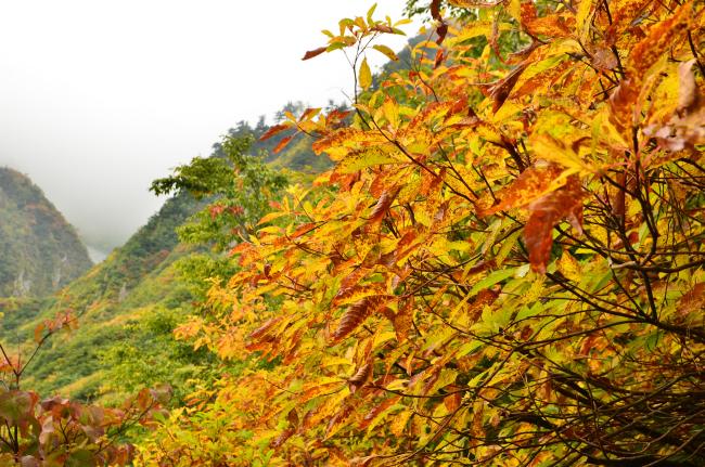 雨飾山_434