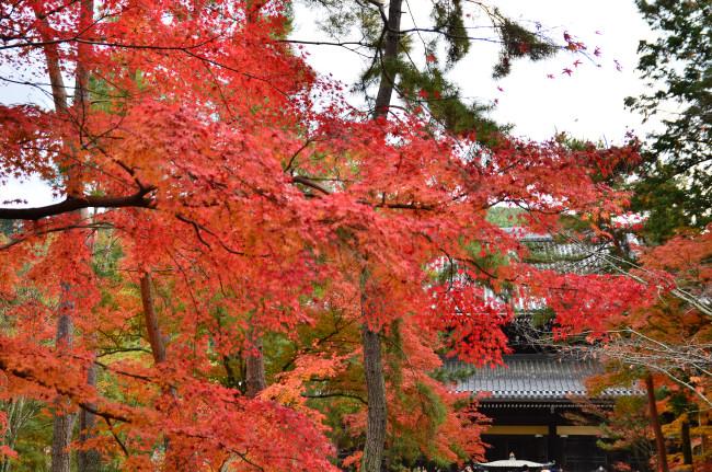 京都大阪_0271