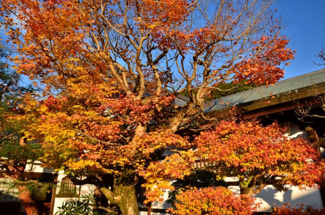 京都大阪_0553