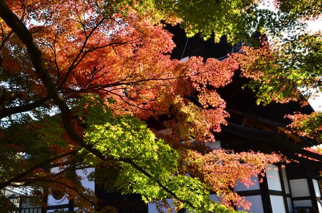 京都大阪_0922