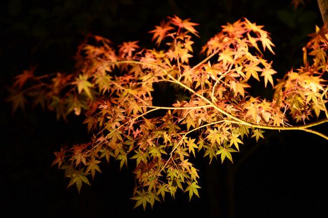 京都_0450