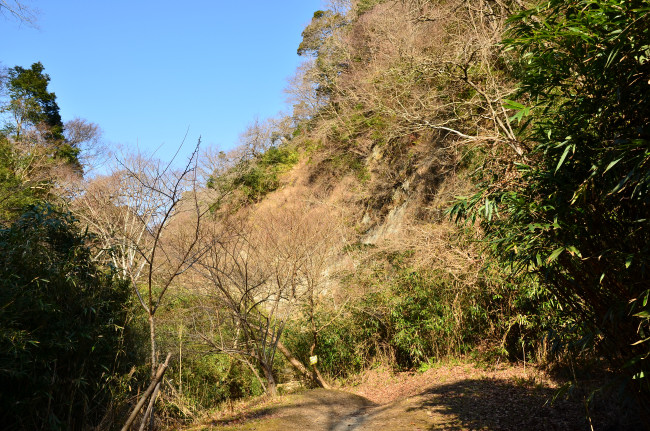 H25梅ヶ瀬_0016