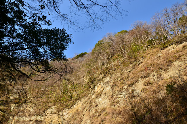 H25梅ヶ瀬_0041